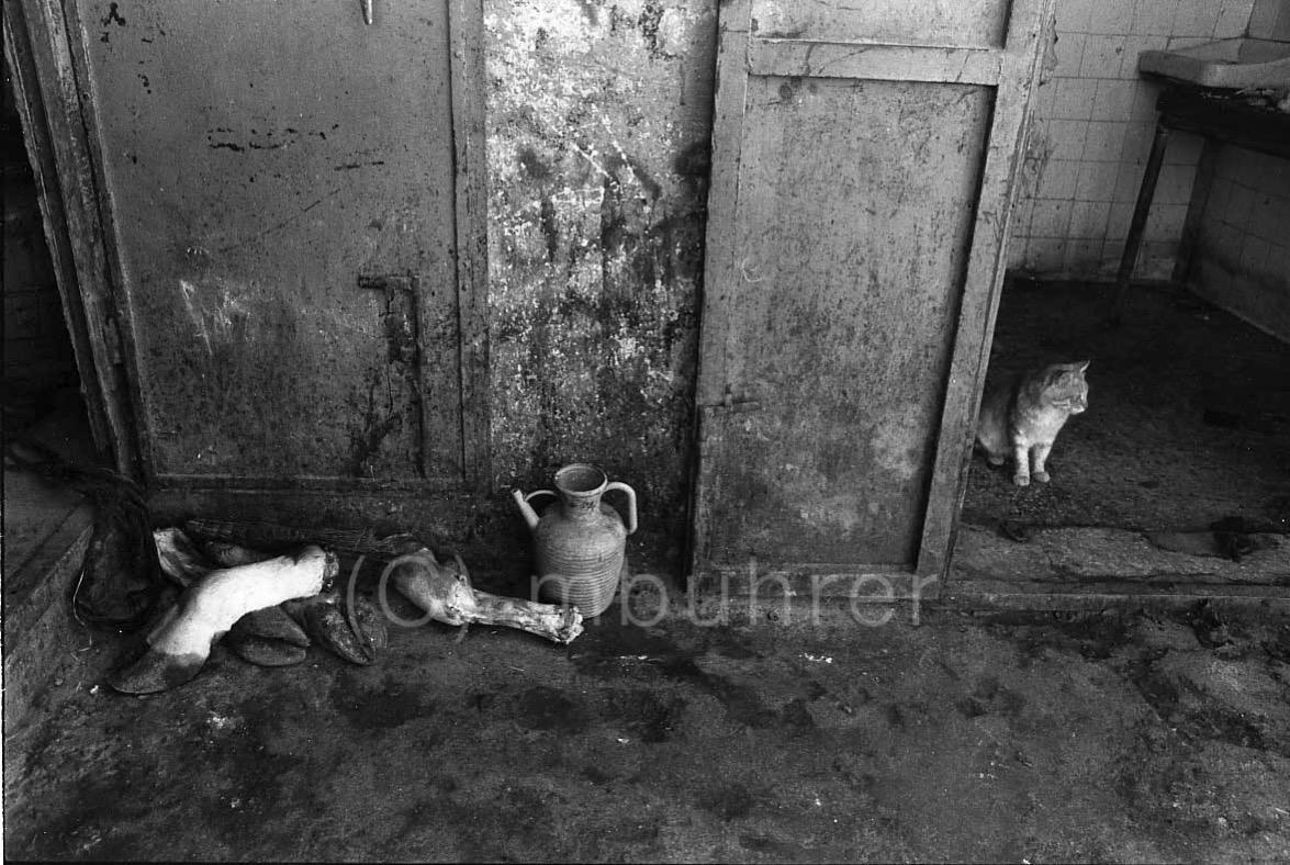 Beit Furik, Palestine, 10.1988